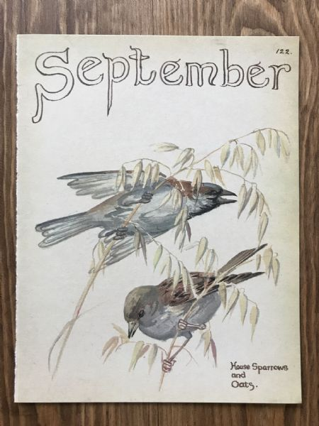 September - Country Diary of an Edwardian Lady - Book Page -